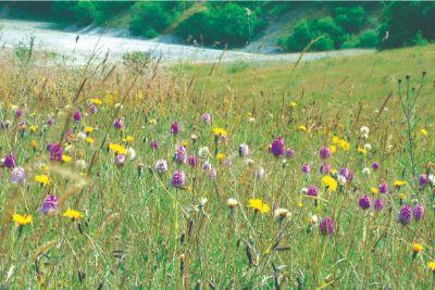 Minera Meadow by Simon Mills