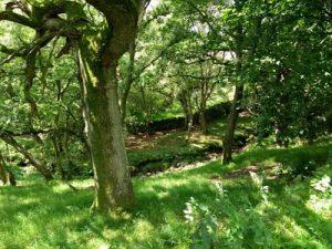 A dappled glade near Cae-Llwyd Reservoir