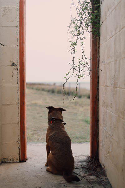 Dog waiting by door