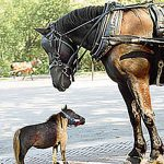Do You Know? The smallest horse
