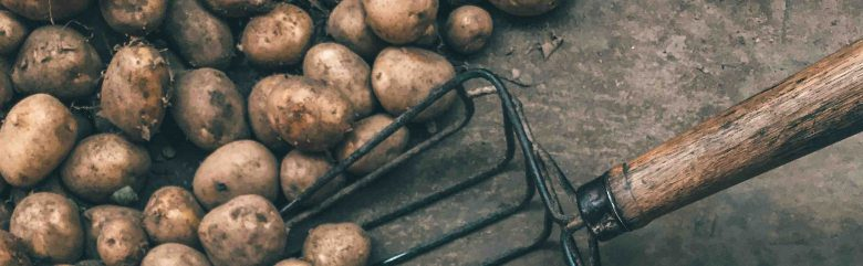 What to Sow and Grow in January - Potatoes